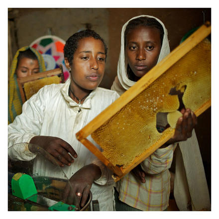 honigbienen-aethiopien-01_foto-tom-pietrasik_web_quad_700x700